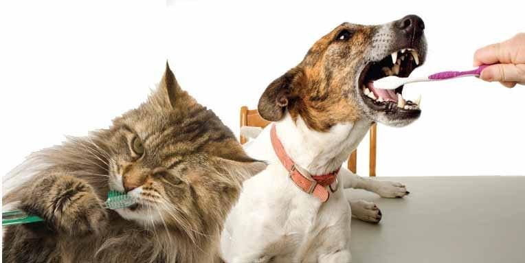 Dr. Jan Bellows on Fear Free pet dentistry on Steve Dale's Pet World
