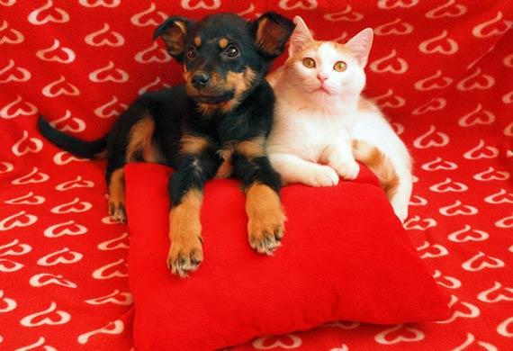 Our pets do love us, says Steve Dale, CABC