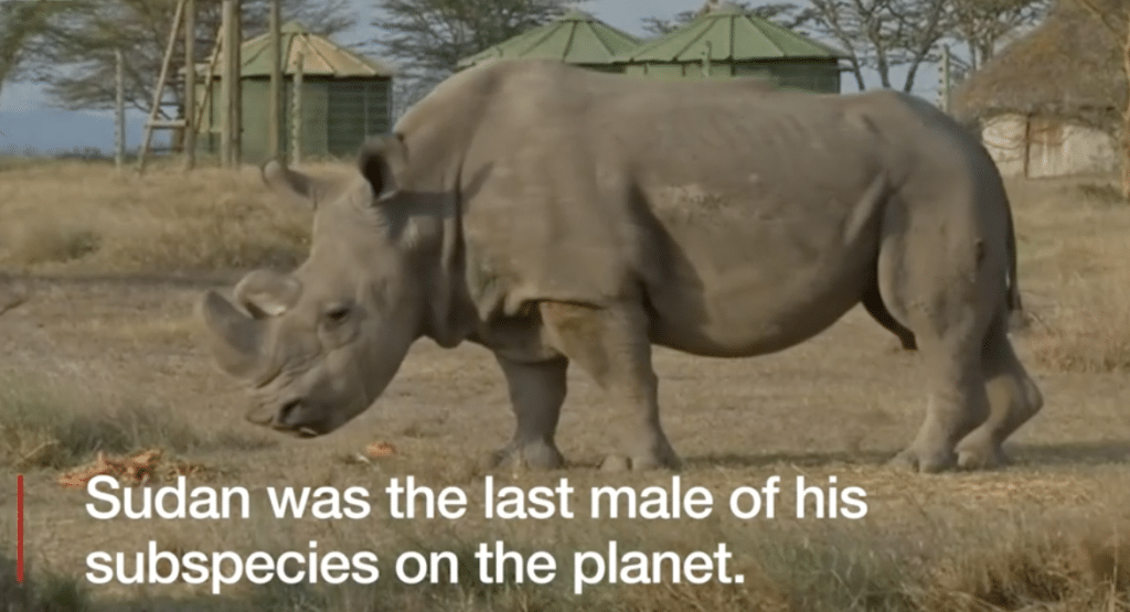 The last male of this subspecies dies - not only is that okay with supposed conservationists, others will likely die at their hands