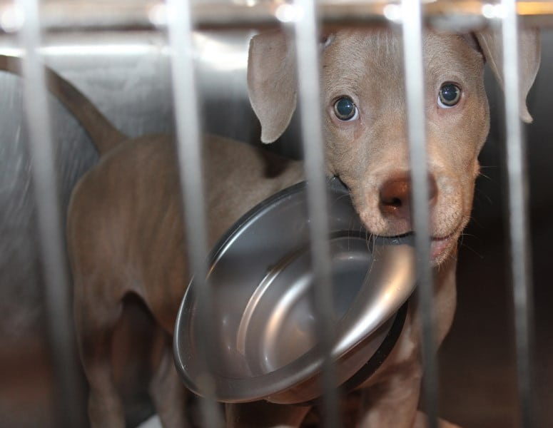 I'm hopeful, even optimistic, about needed changes at Animal Welfare League
