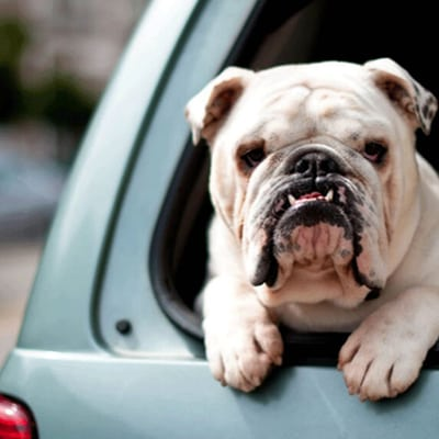 Dogs do die in hot cars