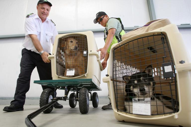 The hope is that pet travel is less dangerous in the future