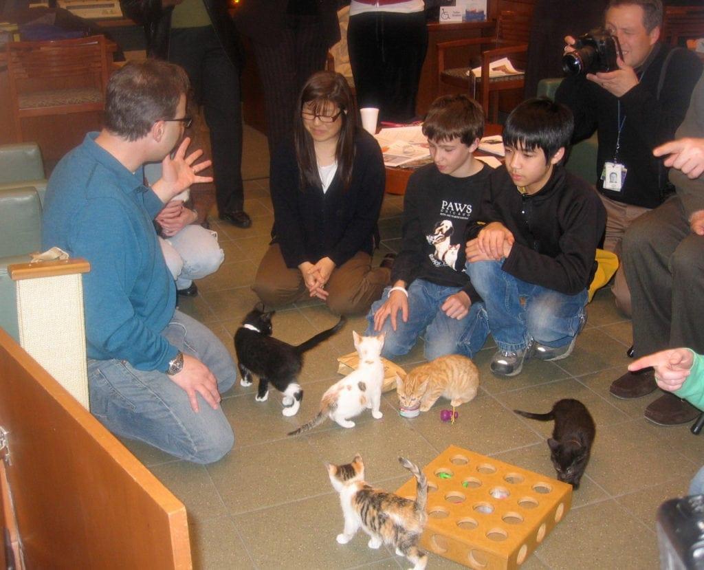 A kitten class in progress