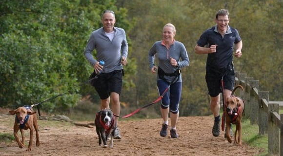 It's that time of year - we get outside more with our dogs, and hopefully exercise more too