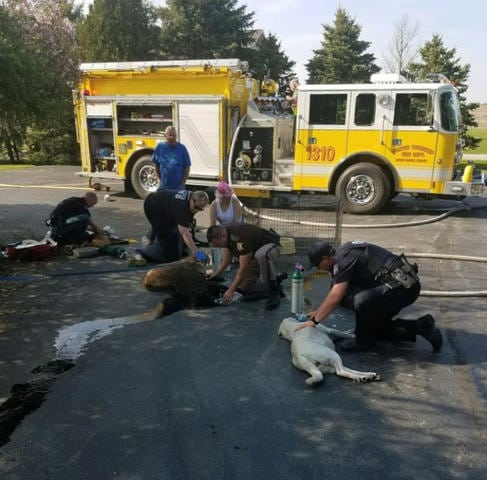 Dogs saved, photo: Hebron Police Department