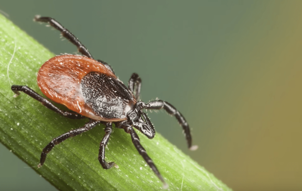 Why it's important to test for tick bite exposure