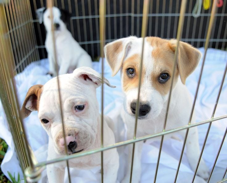 Kankakee, IL among cities limiting pet store sales