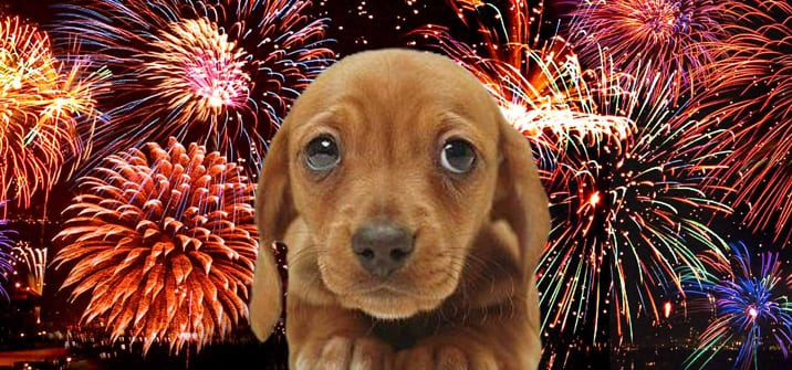 What to do about pets afraid of fireworks