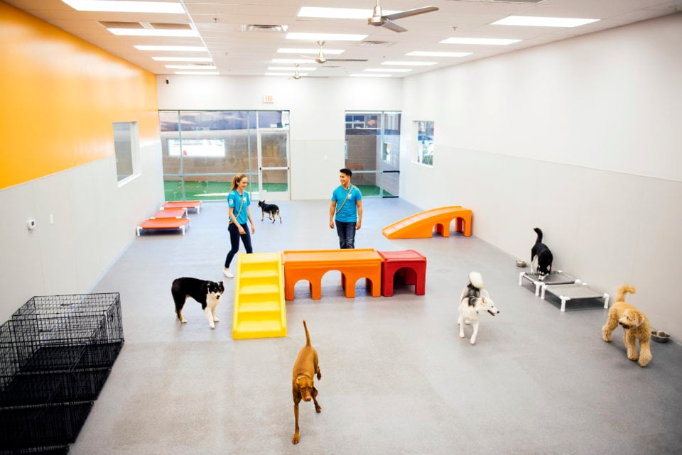 Dogtopia-open-playroom-sized