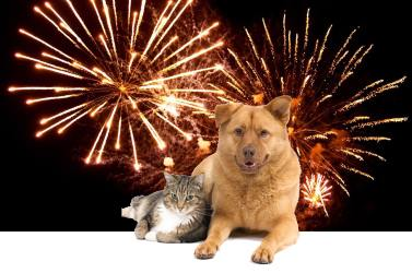 The Fourth is right around the corner - for fearful pets, now what?