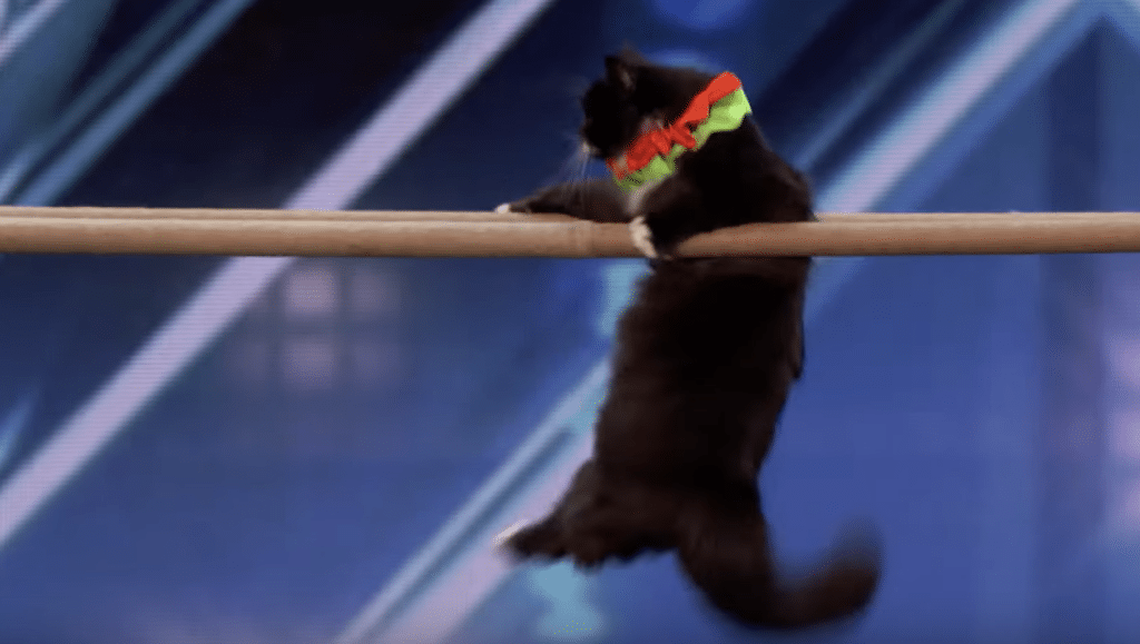 Cats have talent too