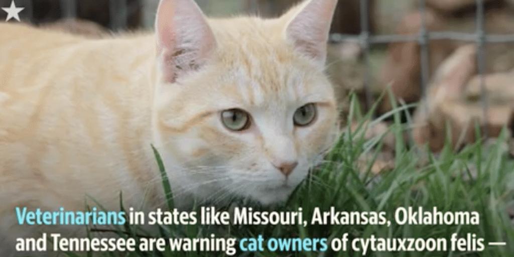 Cats get tick disease too
