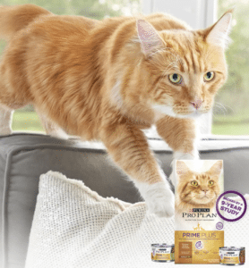 Steve Dale and Dr. Kurt Venator on cat health and nutrition on Steve Dale's Pet World