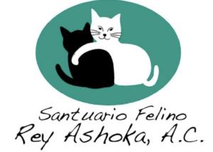 Sancuario Feline Rey Ashoka