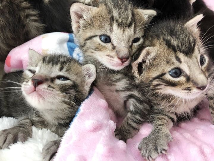 Windy Kitty Cat Cafe seeks nursery for kittens