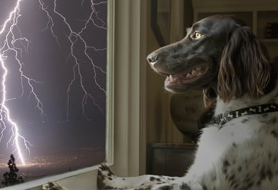 Dr. Debra Horwitz and Steve Dale on what to do about thunderstorm anxiety in dogs