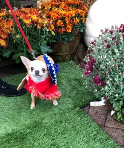 Pet expert Steve Dale on pet Halloween safety tips