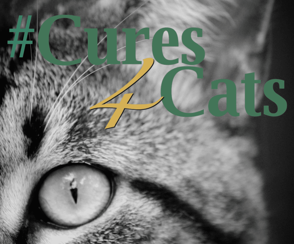 Cures4Cats Day