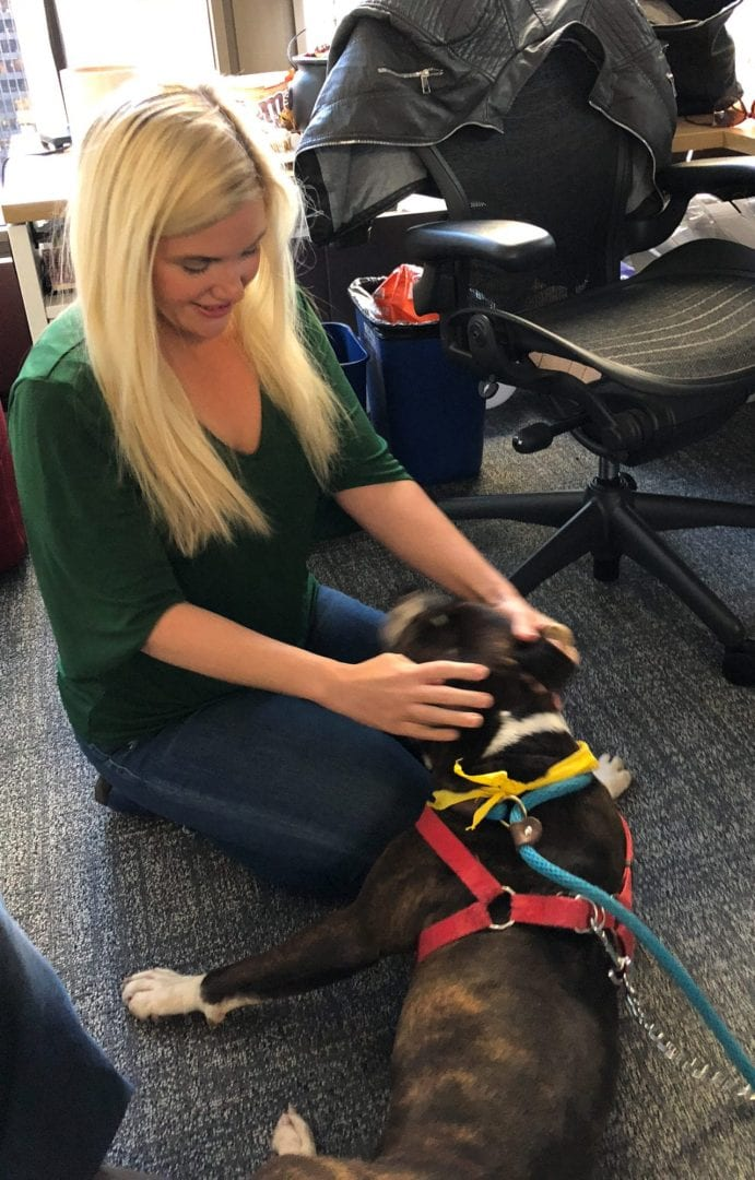 Adopting Quirky from Chicago Animal Care and Control with Bill and Wendy on WGN radio