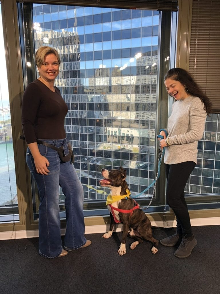 Pet expert Steve Dale on Chicago Animal Care and Control Quirky on WGN radio
