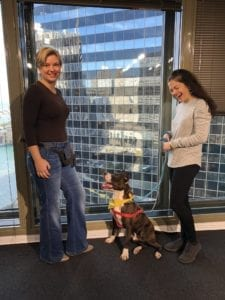 Quirky for adoption on WGN radio