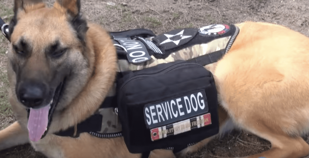 service dog and Steve Dale's Pet World