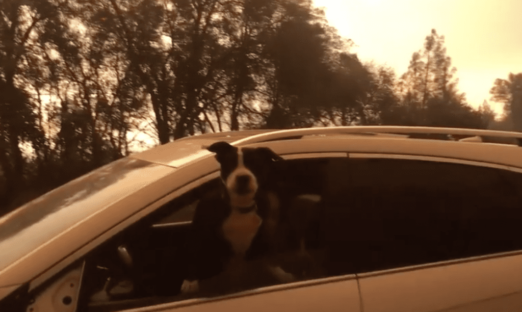pets and California wildfires