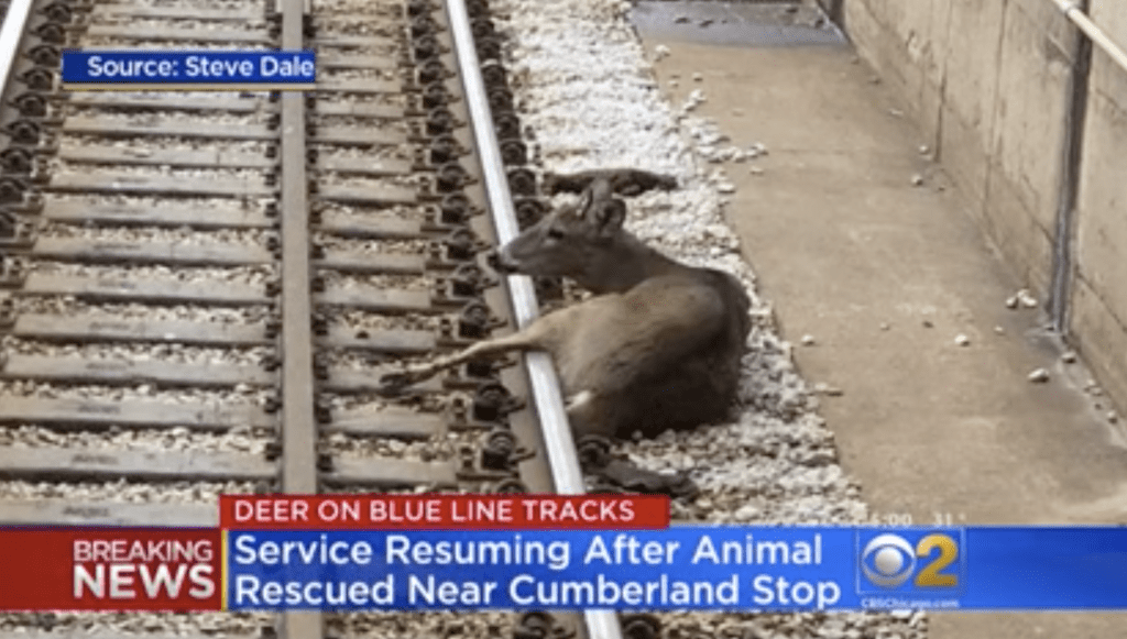 Steve Dale reports on deer on train tracks