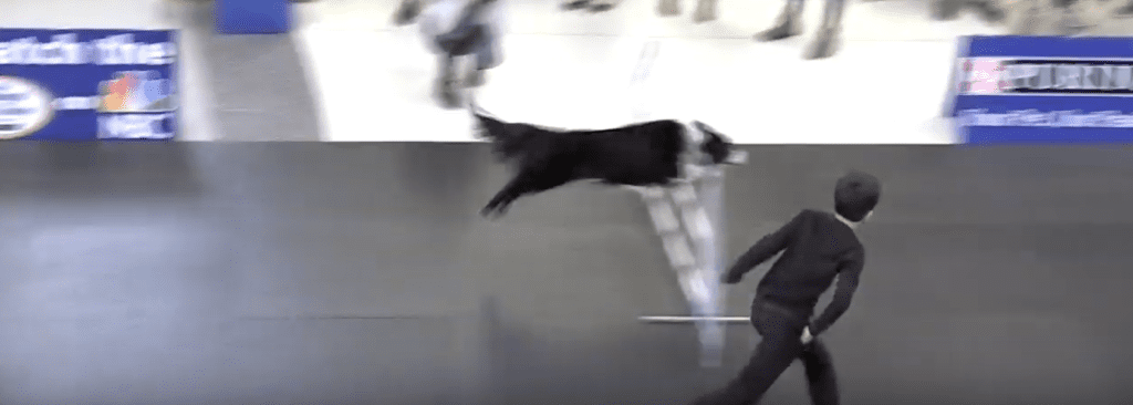 Incredible dog challenge Lourdes Edlin