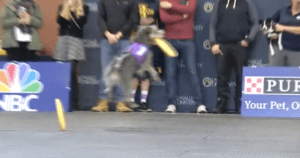 Incredible Dog Challenge and Loudes Edlin and Steve Dale