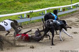 Greyhound racing banned in Florida