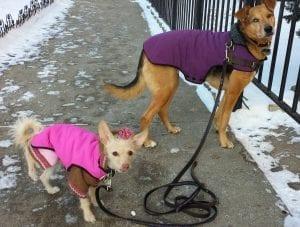 Pet expert Steve Dale on winter pet safety
