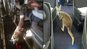 Delta Airlines makes addiitional changes for service and comfort animals