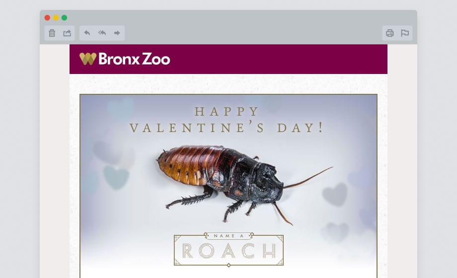 bz-roach-email-certificate