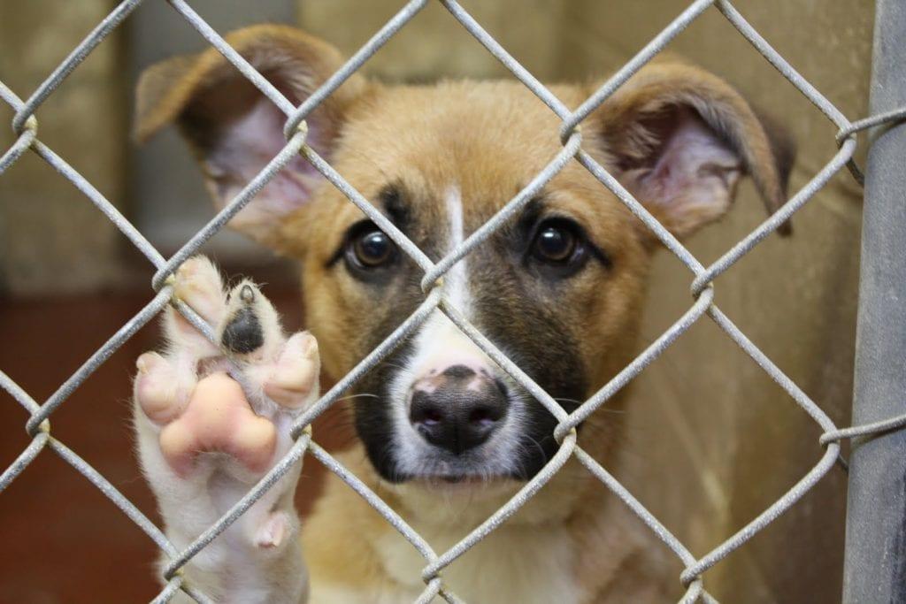 dog-in-shelter