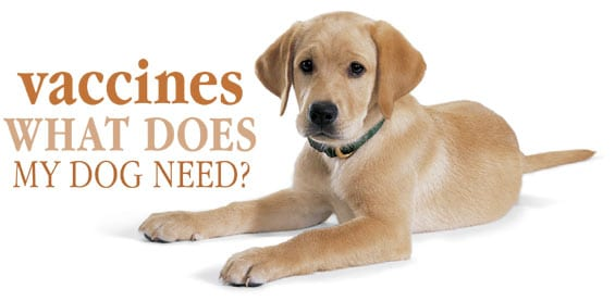 vaccines for dogs, Steve Dale