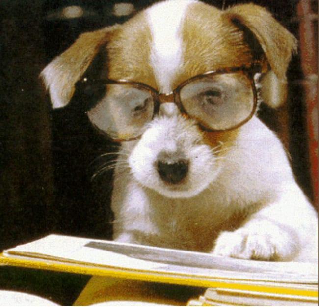 dog-test-for-dog-flu