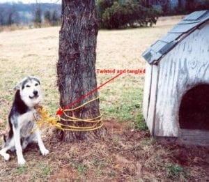 dog_tied-300x261