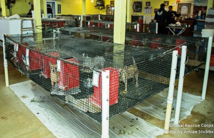 animal-rescue-export-1