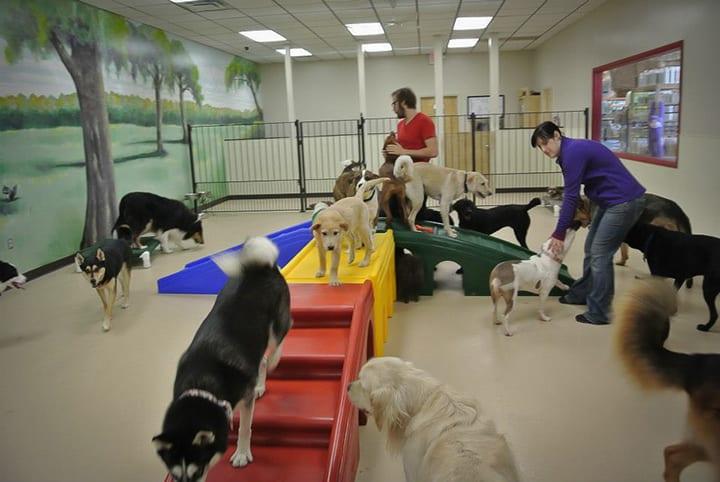 dog-flu, dog-daycare