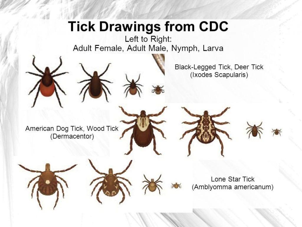 various ticks cdc