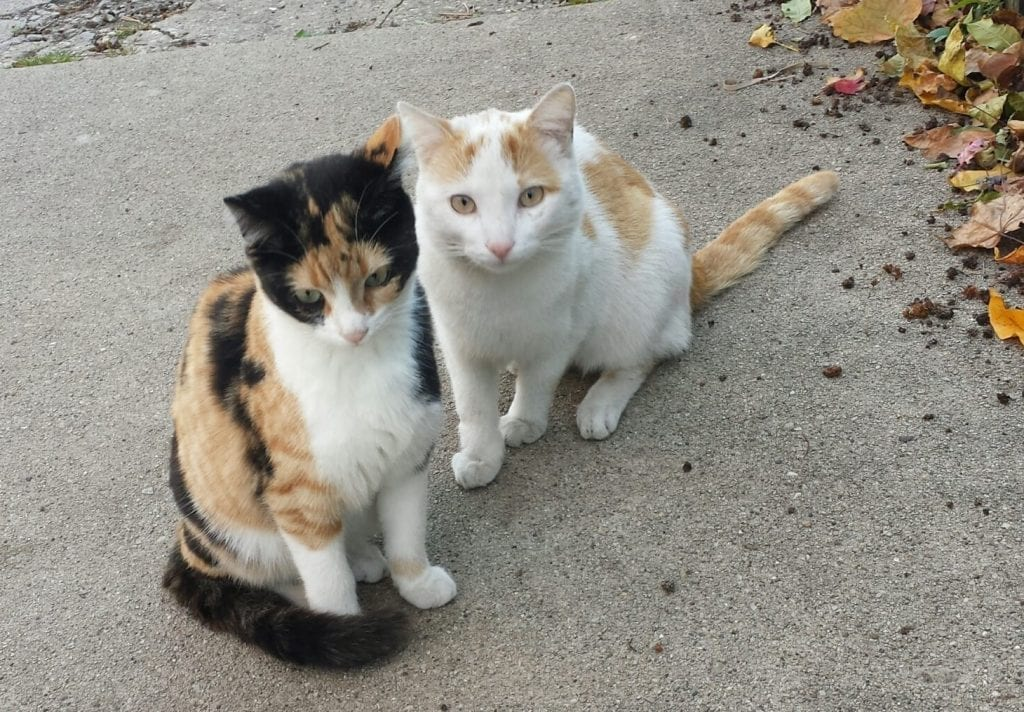feral cats, Steve-Dale, Anne-Beall