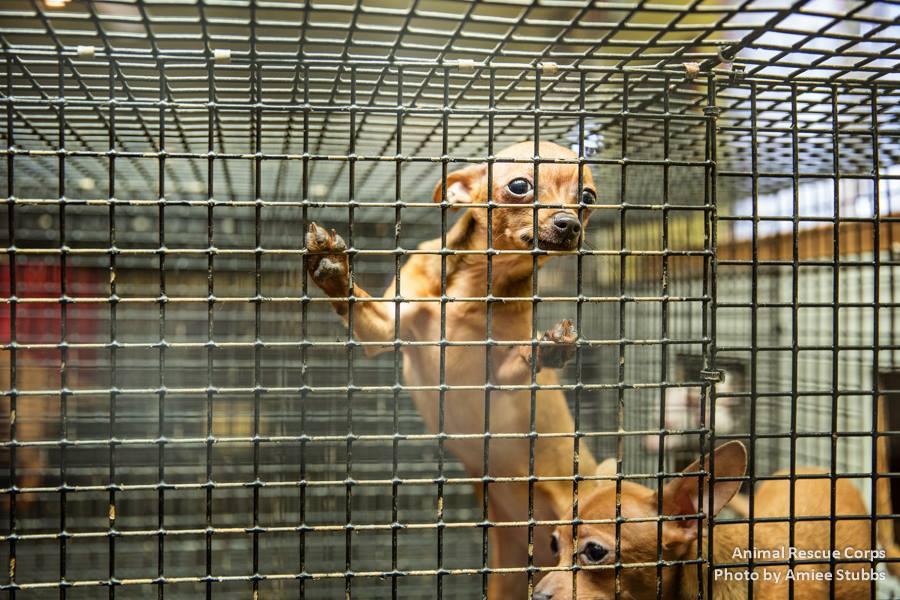 animal-rescue2