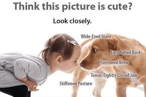 dog bite prevention image