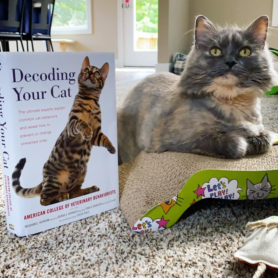 Decoding Your Cat with cat