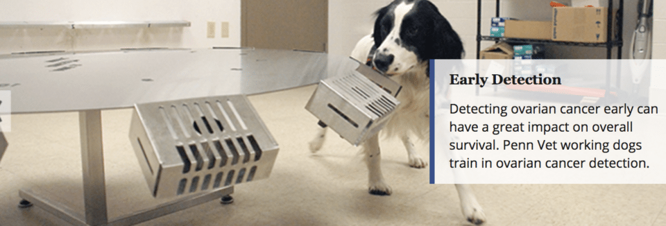 detecting-cancer-dogs
