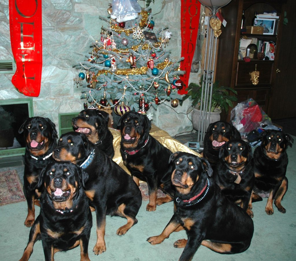 Rept. Tom Campbell's Rottweiler Christmas2006