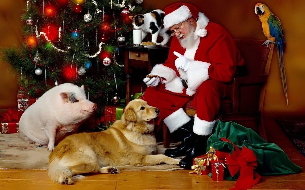 Santa_Claus_ipets