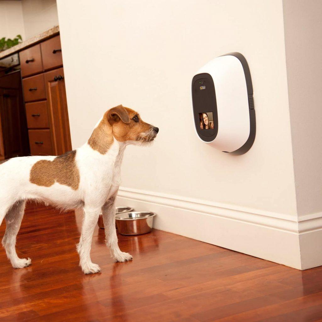 pet camera and dog