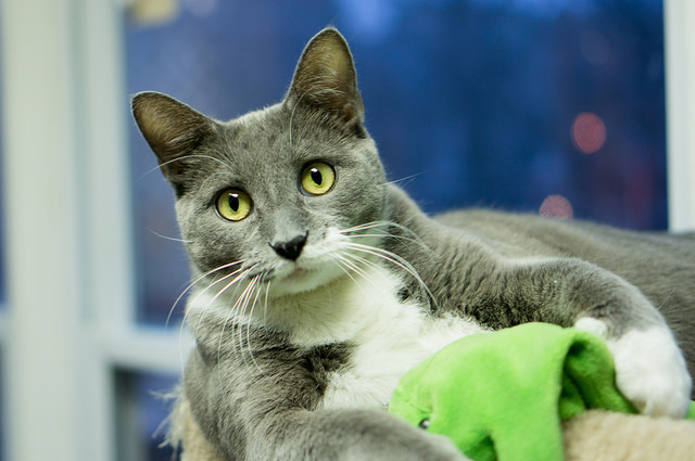 saving-cat-lives